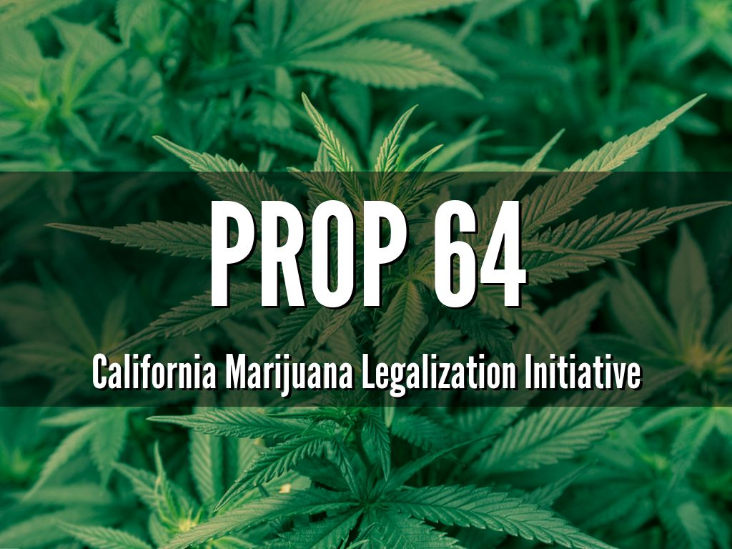 Cannabis growers prepare for a price crash if Prop. 64 passes