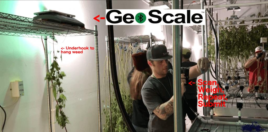 GeoScale in Use
